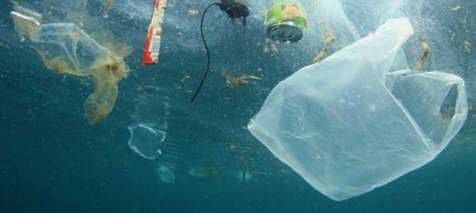 Mikroplastik in aller Munde